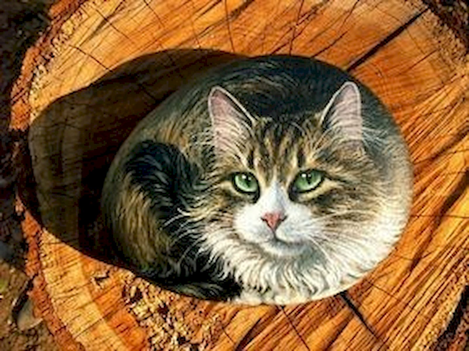 50 Best DIY Painted Rocks Animals Cats for Summer Ideas (46)
