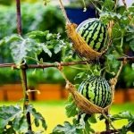 30 Creative DIY For Garden Projects Ideas You Will Want To Save (20)
